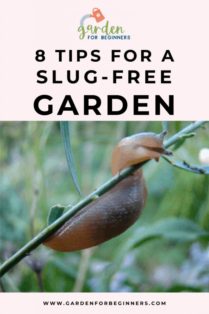 8 tips for a slug-free garden