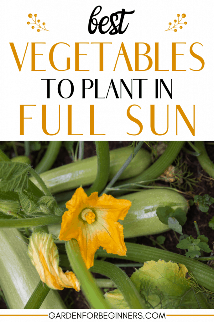 best veggies to grow in direct sunlight