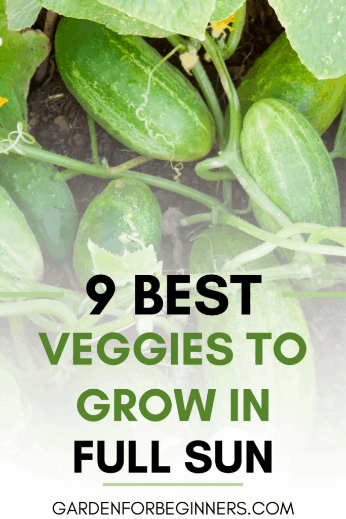 vegetables that need lots of sun