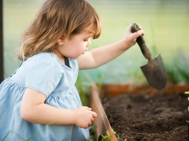 planting a garden with kids should start at an early age - kindergarten or even a little earlier!