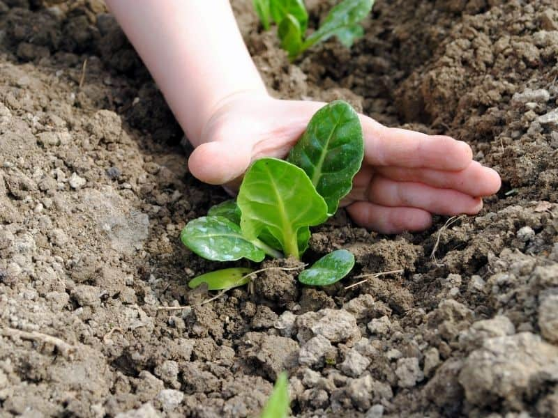 start with seedlings if you don't have time to grow seeds indoors