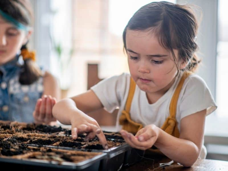 starting seeds with kids is a great way to learn about the plant life cycle