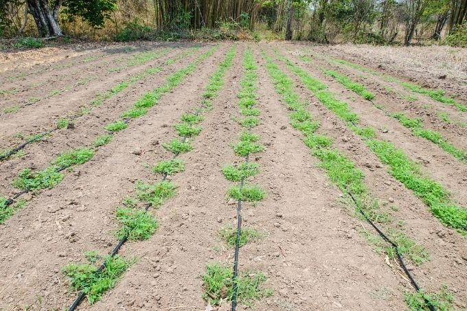 drip irrigation for garden